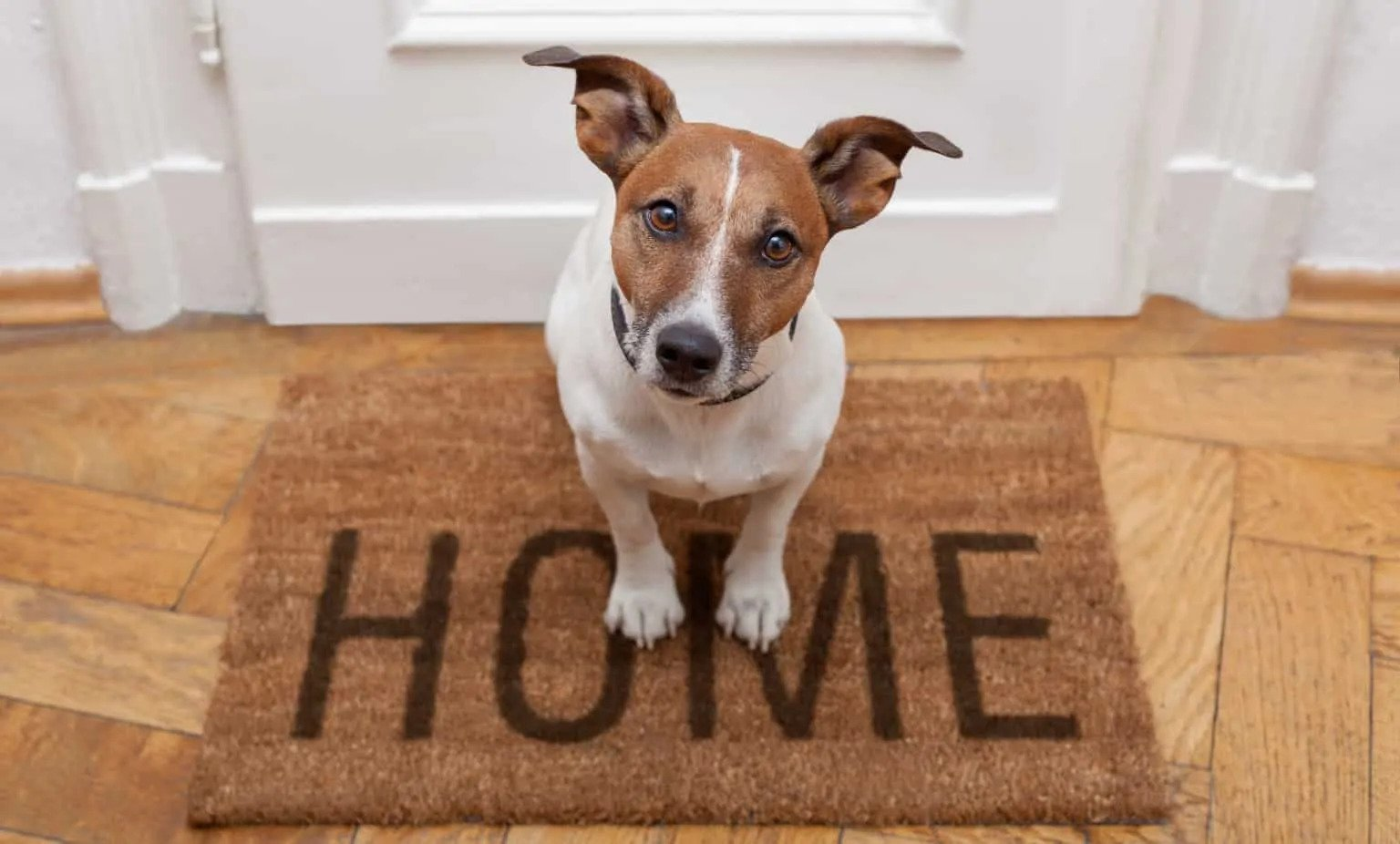 Bringing A Dog Home To A Safe Environment